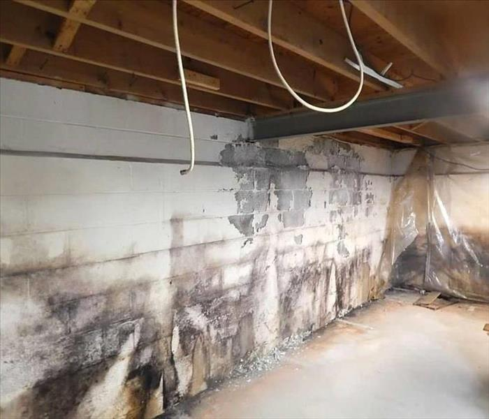 Basement Mold in Floyd County