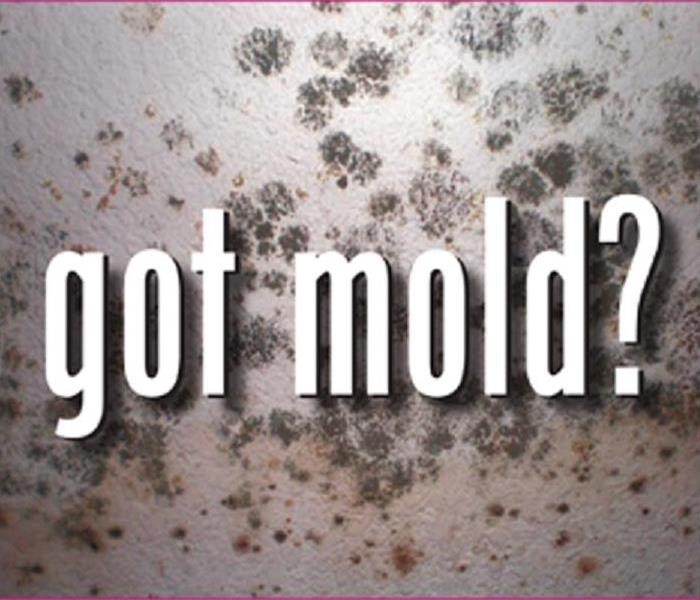 Mold Remediation Does Your Floyd County Home Have a Mold Problem?